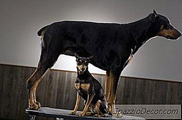 Por Que Os Cães Se Inclinam?