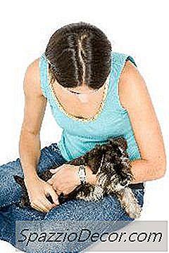 Waarom Schudden Honden Hun Benen Wanneer U Ze Huisdier?