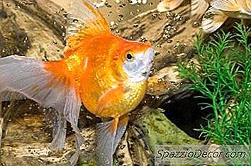 Waarom Wordt Het Water Geel In Een Aquarium?