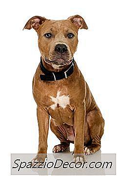 Kommer En Hund Att Bli Karantän För Att Bita I Indiana?