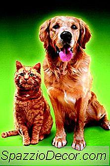 La Ventaja De Tener Un Perro Vs. Un Gato Para Una Mascota