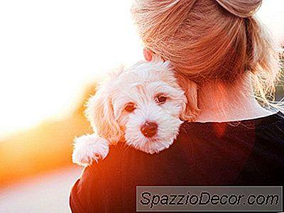 Benadryl For Dogs Dosagem Efeitos Colaterais