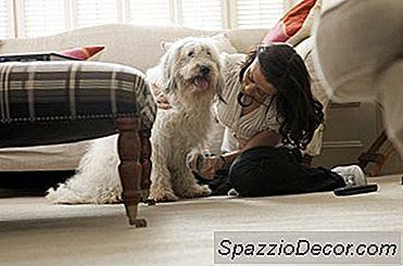 Den Beste Hundebørsten For To Strøk