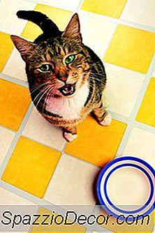As Melhores Telhas De Assoalho Para Gatos