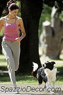 Kan Hundar Springa Med Stövlar?