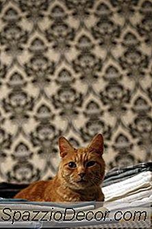 As Folhas Do Secador Podem Ferir Gatos?