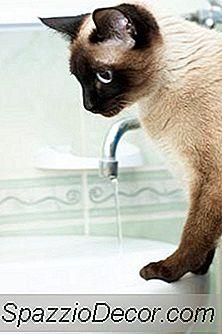 Skal Katte Bades?
