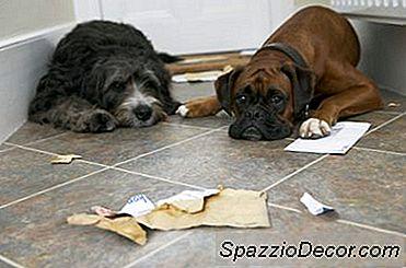 Cães Se Comportam Mal Por Causa De Outros Cães?