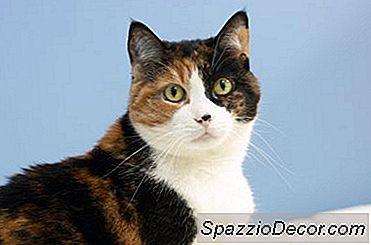 Mâncăruri De Casă Pentru Pisici Cu Boală De Rinichi