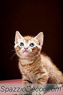 Medicina Homeopática Para Gatos