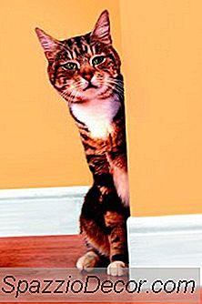 Prodotti Omeopatici Per Gatti
