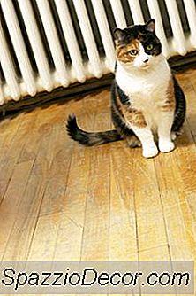 Hormooninjecties Voor Katten In Warmte