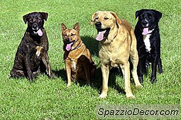 Quantos Tipos Diferentes De Casacos Existem Para Cães?