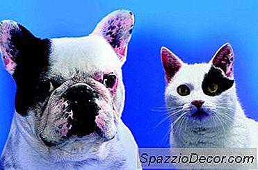 Hoe Vraag Ik Financiële Hulp Aan Voor Geredde Honden En Katten
