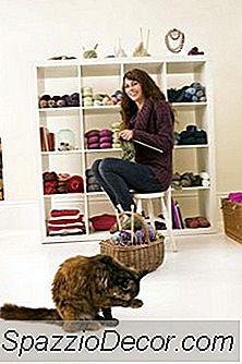 Como Persuadir Um Gato De Timidez