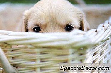 Cómo Hacer Que Tu Cachorro Te Respete