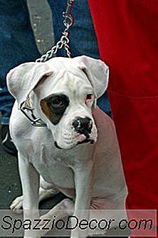 Como Ajudar Um Cão Com Frustração De Barreira