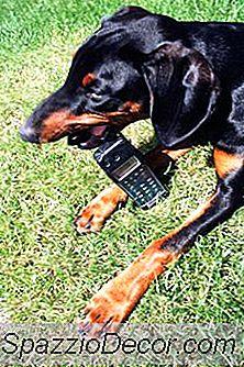 Cómo Mantener A Los Perros Sin Masticar Sin Aerosol Amargo