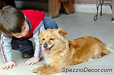 Hoe Vlooien Op Honden Organisch Te Doden