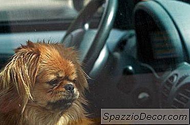 Cum De A Ieși Din Stat Cu Câini
