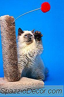 Cómo Evitar Que Los Gatos Se Rasquen Los Muebles Con Un Spray De Remedio Casero