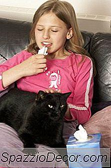 Cómo Tratar El Síndrome Del Intestino Irritable En Los Gatos
