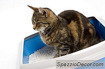 Kitty Litter Mess En Todo El Piso: Cómo Evitar Que Un Gato Lo Haga