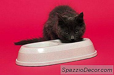 Fuentes De Mascotas Para Gatos