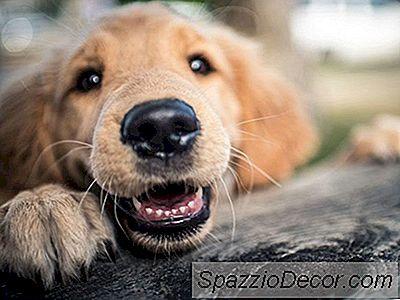 Domande E Risposte Sull'Animale Domestico: Il Nostro Cane Si Diverte A Scappare (We'Re Stumped)