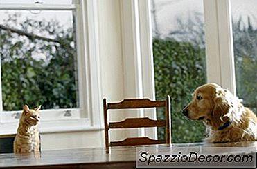 Ricette Per Animali Domestici Per Cani E Gatti
