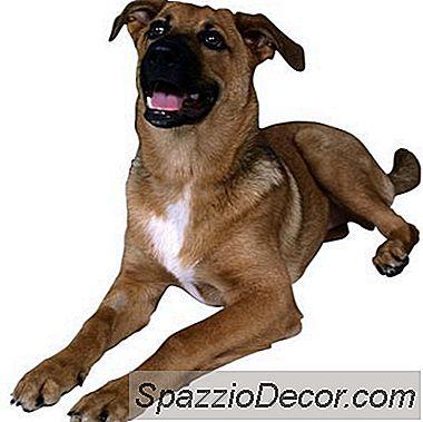 Planes De Cuidados Preventivos Para Perros