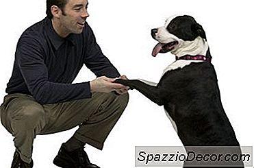 En Opskrift Til Nemme At Lave Hundeservietter Uden Gær