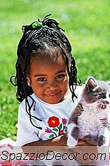 Tratamiento Tópico De Pulgas Para Gatitos