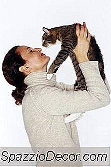 El Tipo De Persona Que Le Gustan Los Gatos