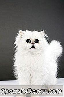 Ukontrollerbar Urinering Hos Katter