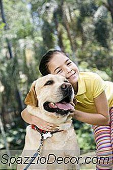 Quais São As Melhores Raças De Cães Para Crianças?