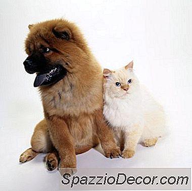 Vad Orsakar Din Katt Att Agera Konstigt?