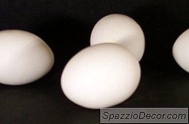 Ceea Ce Arată Ouăle De Câine?