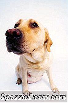 O Que Significa Quando Uma Fêmea Fixa Monta Outro Cão?