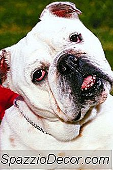 ¿Qué Sucede Cuando Un Perro Mata Mucho?