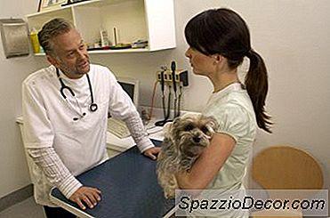 ¿Qué Pasa Si La Enfermedad De Lyme En Un Perro No Desaparece Después De Los Antibióticos?