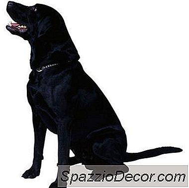 Che Cosa È Dog Dander?