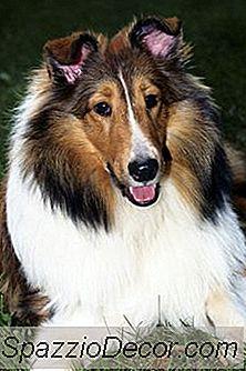 ¿Qué Hace Que Los Abrigos Para Perros Sean Brillantes Y Brillantes?