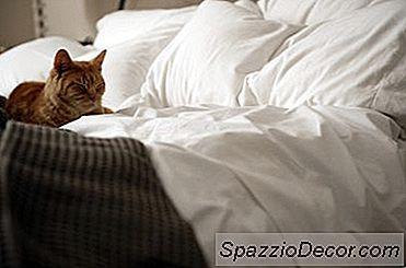 Care Este Durata Normală De Viață A Pisicii?