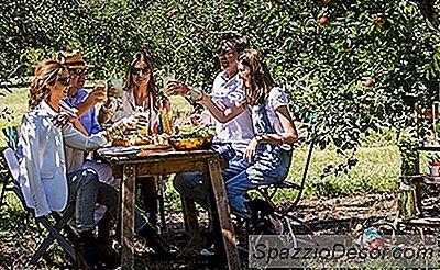 10 Apple Orchards Die U Dit Najaar Moet Bezoeken