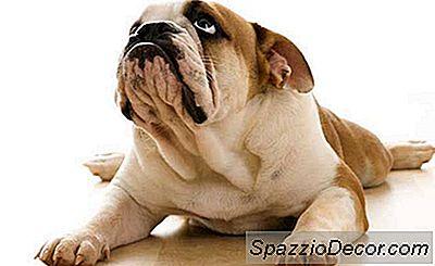 Dogvacay.Com: En Ny Tjeneste For At Holde Pups Trygge, Du Sane