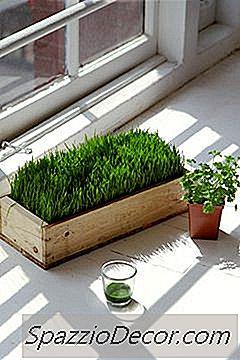 ¿Cuáles Son Los Nutrientes En Una Onza De Wheatgrass?