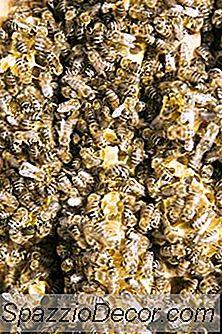 Beneficiile Pollenului Albinelor Organice