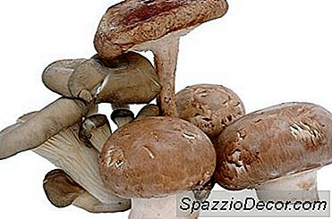 Che Tipo Di Nutrienti Hanno I Funghi?